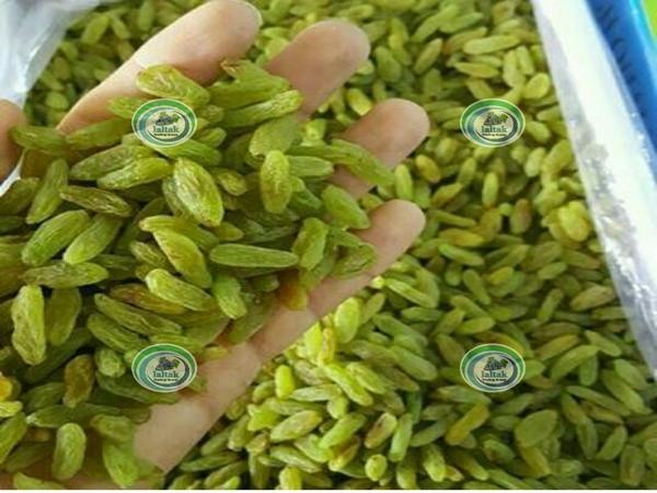 صادرات کشمش سبز
