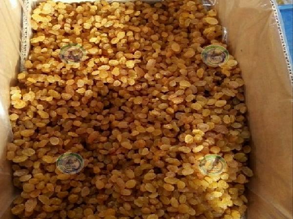 فروش کشمش طلایی ملکان در بازار