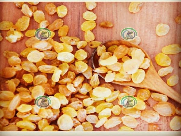 فروش کشمش طلایی کارخانه