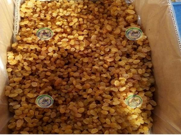 کشمش گلدن انگوری صادراتی